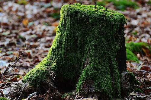 Tree Stump 971853 1280