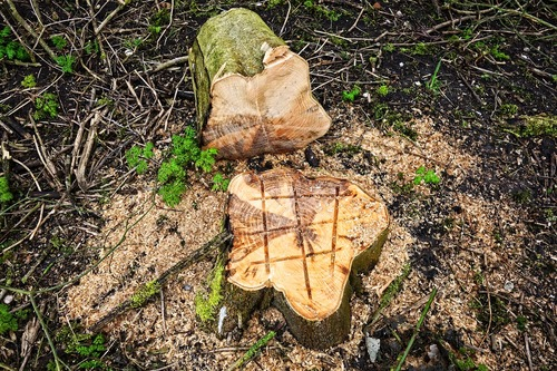 Tree Stump 3219805 1280