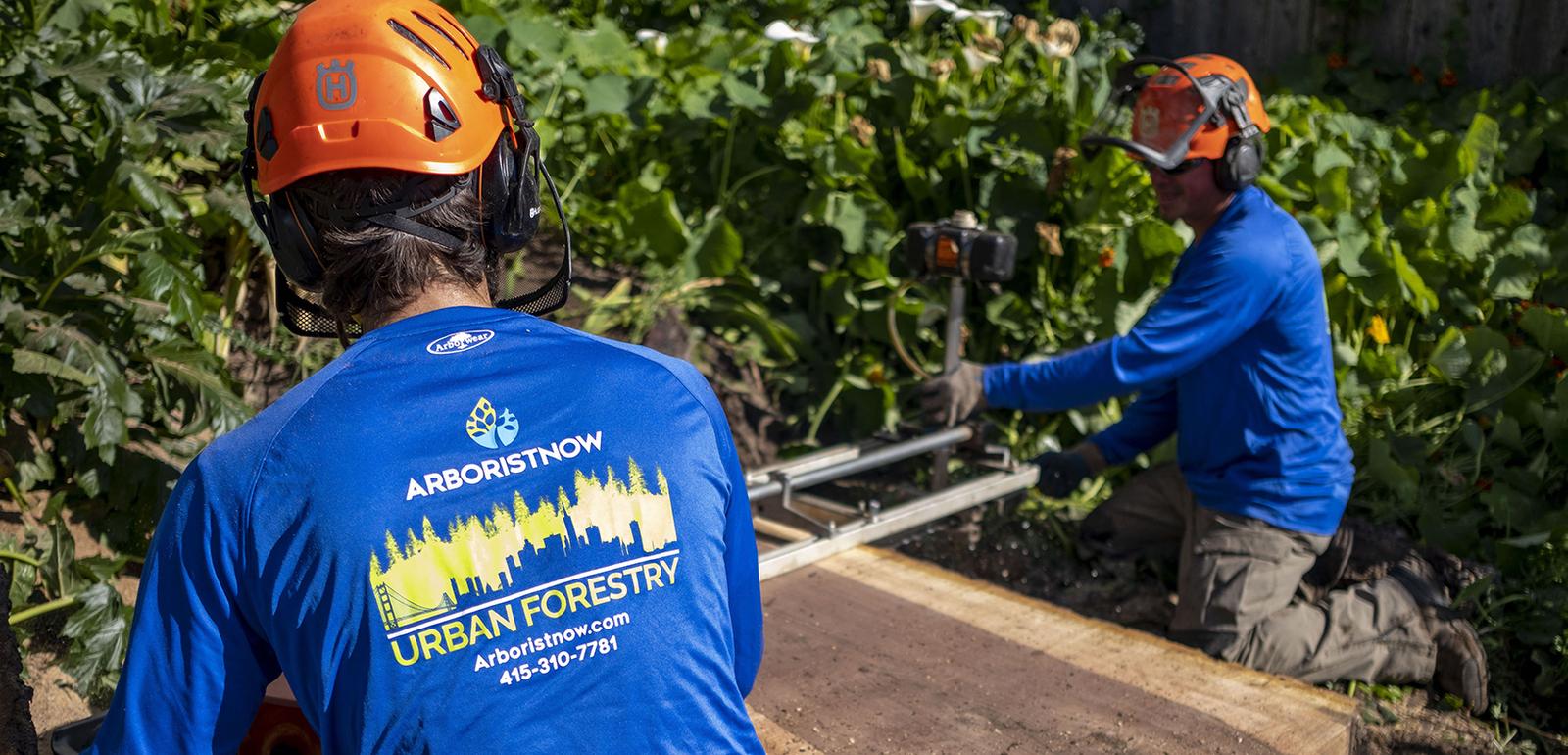 Best Tree Service in San Francisco | Landscaping | Arborist