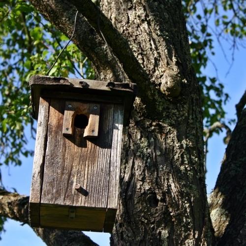 Tree Friendly Bird House Mounting Arborist Now